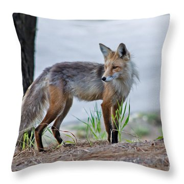 Red Fox Throw Pillow by Robert Bales