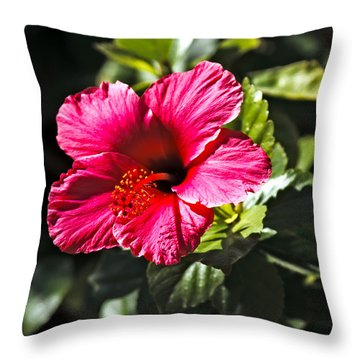 Red Hibiscus Throw Pillow by Robert Bales