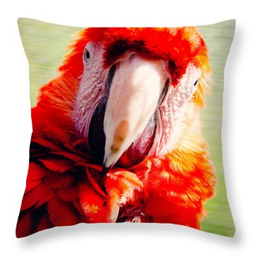 Red Macaw Throw Pillow by Pati Photography