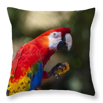 Red Parrot  Throw Pillow by Garry Gay