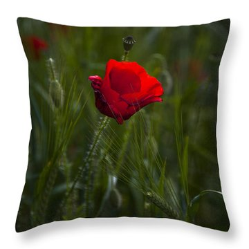Red Poppy Throw Pillow by Svetlana Sewell