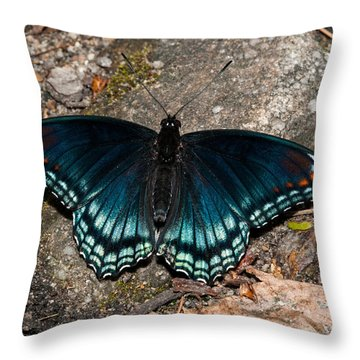 Red Spotted Purple Butterfly Throw Pillow by Lara Ellis