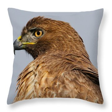 Red Tail Hawk Portrait Throw Pillow by Paul Marto