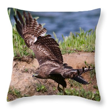 Red Tail On The Hunt Throw Pillow by Paul Marto
