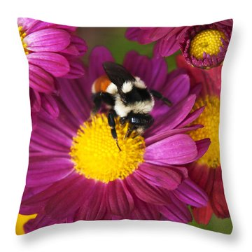 Red-tailed Bumble Bee Throw Pillow by Christina Rollo