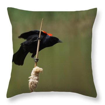 Red Winged Blackbird 3 Throw Pillow by Ernie Echols