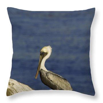 Resting Pelican Throw Pillow by Sebastian Musial