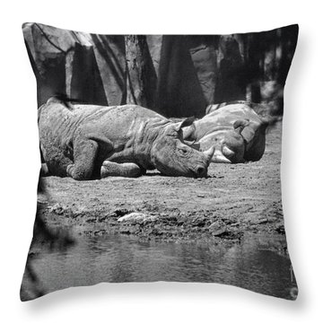 Rhino Nap Time Throw Pillow by Thomas Woolworth