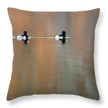 Ring Necked Ducks Throw Pillow by Bill Wakeley