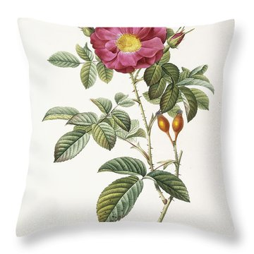 Rosa Damascena Coccina Throw Pillow by Pierre Joseph Redoute