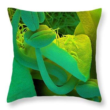 Rosemary Sem Throw Pillow by Spl