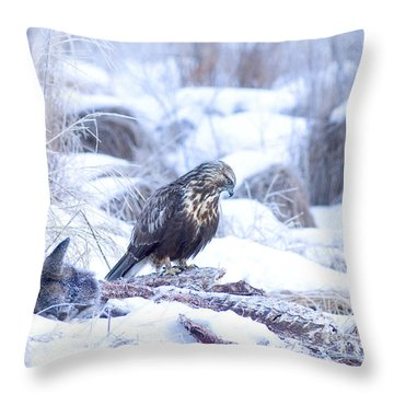 Rough Legged Hawk On Deer Carcass Throw Pillow by Gregory K Scott