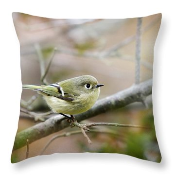 Ruby-crowned Kinglet Throw Pillow by Christina Rollo