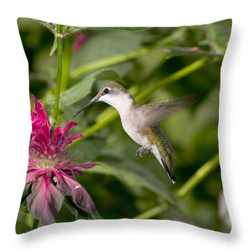 Ruby-throated Hummingbird Throw Pillow by Gregory K Scott