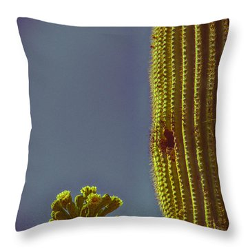 Saguaro In Bloom V2 Throw Pillow by Judi FitzPatrick