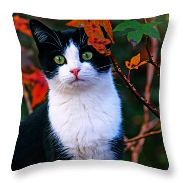 Salem Throw Pillow by Andy Lawless