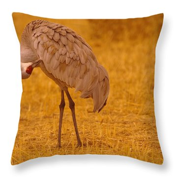 Sandhill Crane Preening Itself Throw Pillow by Jeff Swan