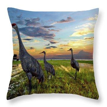 Sandhill Sunset Throw Pillow by Debra and Dave Vanderlaan
