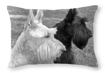 Scottish Terrier Dogs Black And White Throw Pillow by Jennie Marie Schell