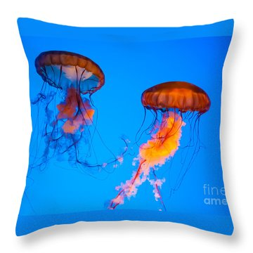 Sea Nettles Throw Pillow by Anthony Sacco