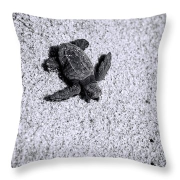 Sea Turtle In Black And White Throw Pillow by Sebastian Musial