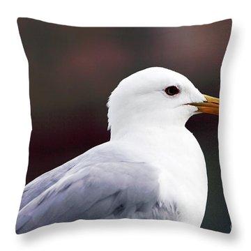 Seagull Throw Pillow by John Rizzuto