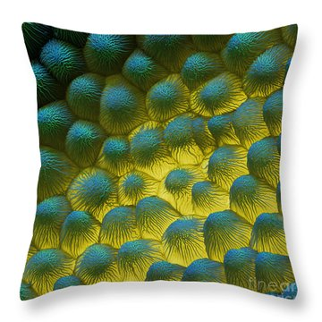 Sem Of Rapeseed Flower Throw Pillow by Eye of Science