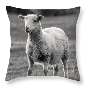 Sheep Art  Throw Pillow by Lucid Mood