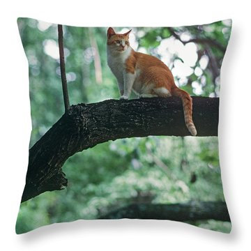 Shorthair Cat Throw Pillow by James L. Amos
