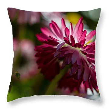 Shy Mum - Chrysanthemum Throw Pillow by Jordan Blackstone