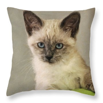 Siamese Kitten Throw Pillow by Kenny Francis