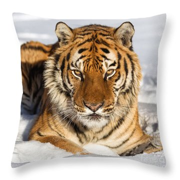 Siberian Tiger Face To Face Throw Pillow by Jerry Fornarotto