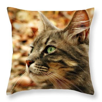 Silver Grey Tabby Cat Throw Pillow by Michelle Wrighton