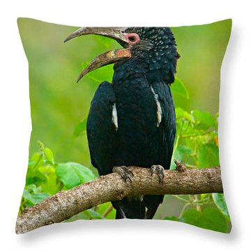 Silvery-cheeked Hornbill Perching Throw Pillow by Panoramic Images