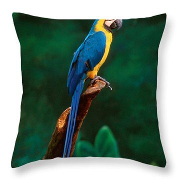 Singapore Macaw At Jurong Bird Park  Throw Pillow by Anonymous