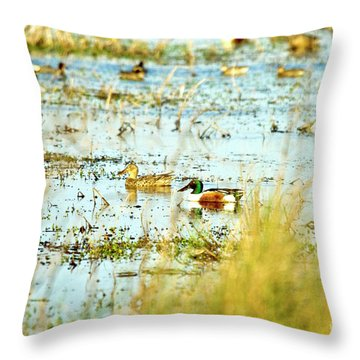 Sitting Ducks Throw Pillow by Scott Pellegrin