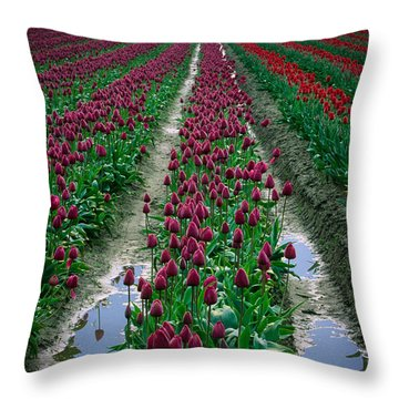 Skagit Valley Tulips Throw Pillow by Inge Johnsson