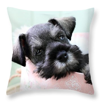 Sleepy Mini Schnauzer Throw Pillow by Stephanie Frey