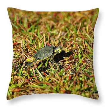 Slider To Go Throw Pillow by Al Powell Photography USA