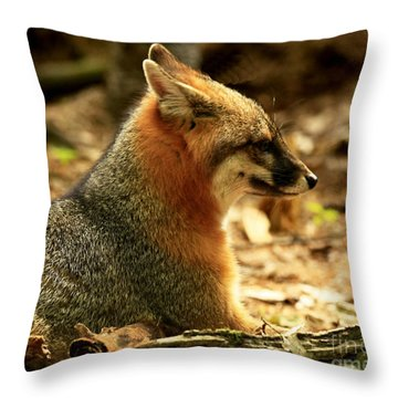 Sly Rare Grey Fox  Throw Pillow by Inspired Nature Photography Fine Art Photography