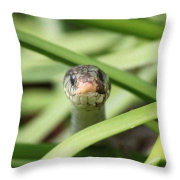 Snake In The Grass Throw Pillow by Jennifer E Doll