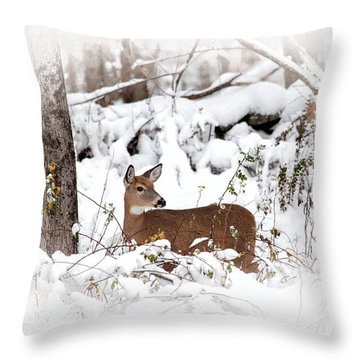 Snow Doe Throw Pillow by Karol Livote