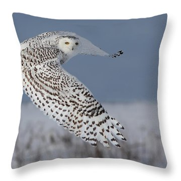 Snowy In Action Throw Pillow by Mircea Costina Photography