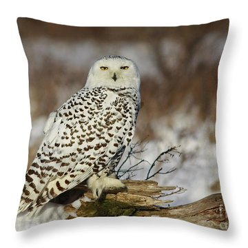 Snowy Owl At Sunset Throw Pillow by Inspired Nature Photography Fine Art Photography