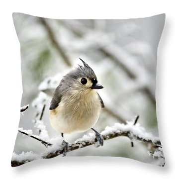 Snowy Tufted Titmouse Throw Pillow by Christina Rollo