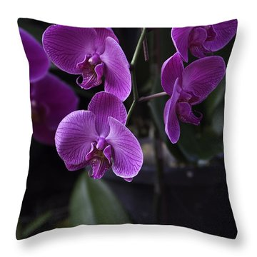 Some Very Beautiful Purple Colored Orchid Flowers Inside The Jurong Bird Park Throw Pillow by Ashish Agarwal