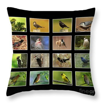 Song Birds Of Canada Collection Throw Pillow by Inspired Nature Photography Fine Art Photography