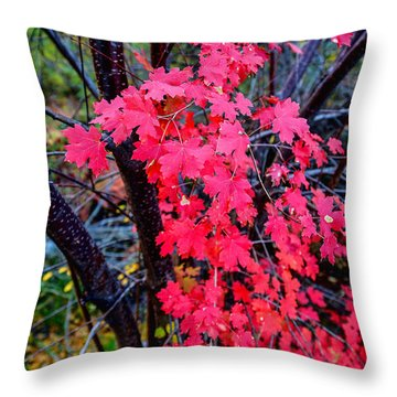 Southern Fall Throw Pillow by Chad Dutson