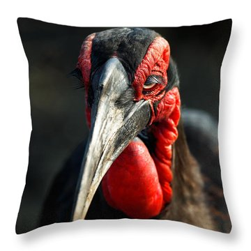 Southern Ground Hornbill Portrait Front View Throw Pillow by Johan Swanepoel