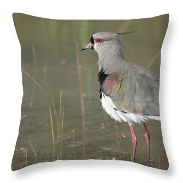 Southern Lapwing In Marshland Pantanal Throw Pillow by Tui De Roy